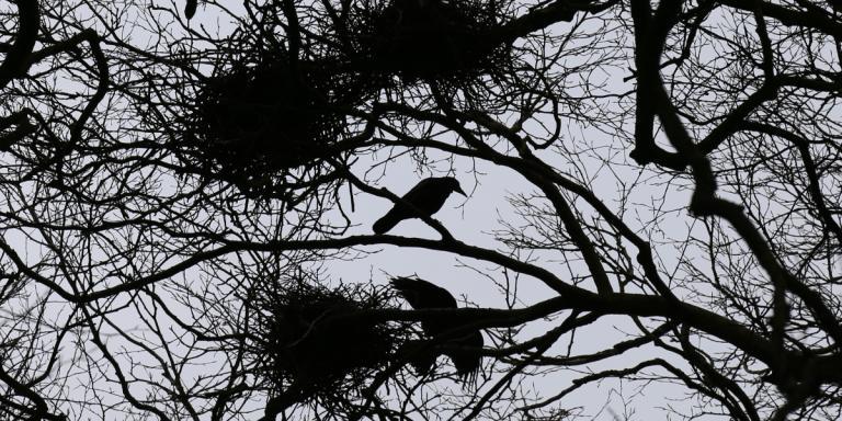 04 390 Ravens at Tara