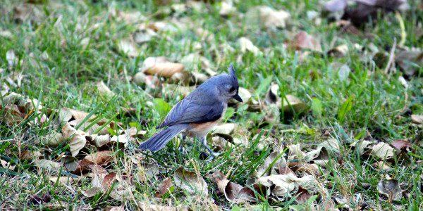 bird 11.27.14