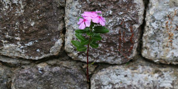 flower in rock 600x300
