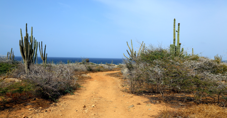 07 Aruba 221