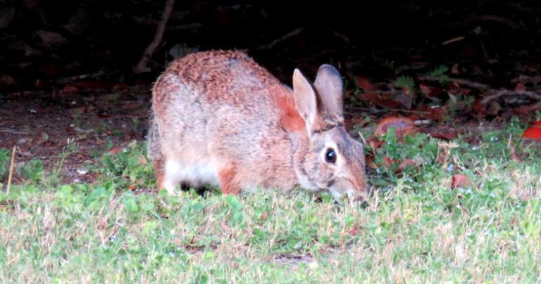 rabbit 04.07.16