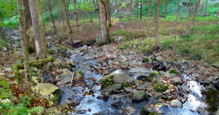 ECG 2012 creek