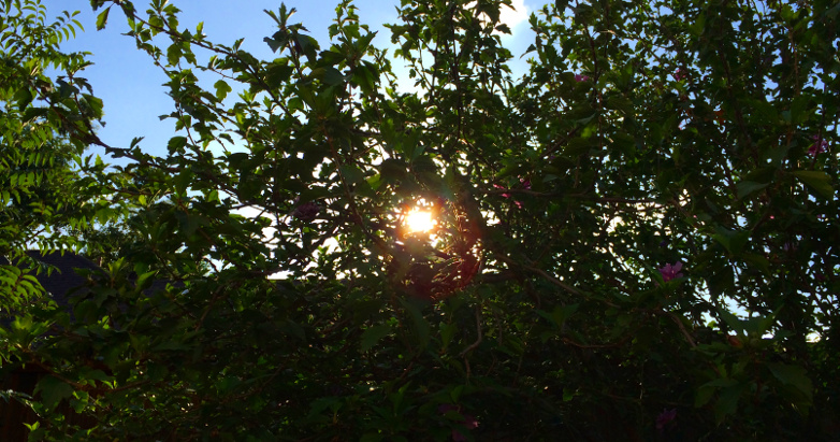 sun in trees 08.10.14
