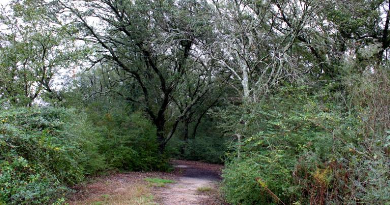 San Jacinto path 2014