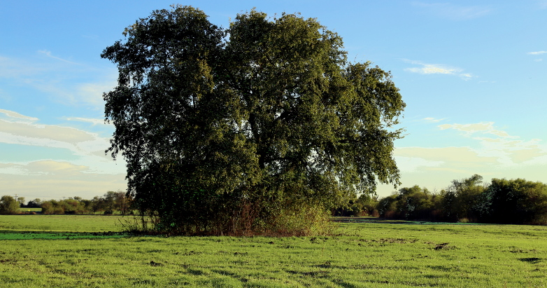 tree in McKinney 11.07.15