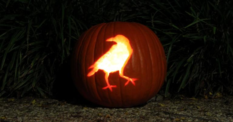 Raven pumpkin Halloween 2013