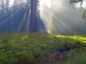 sequoia_27_bg_092103