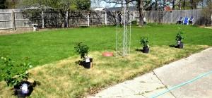 sod herbicide
