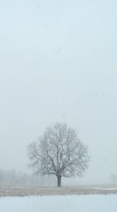 field tree 2014