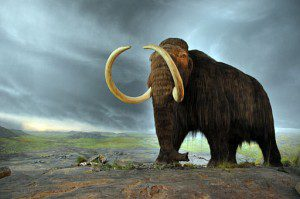 512px-Woolly_mammoth