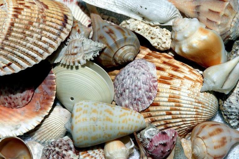sea-shells-1886613_1280