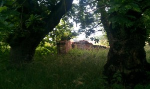 The remains of an old building in Dalkeith Country Park