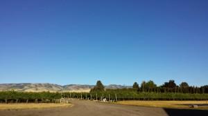 The Vineyard at Rasa Winery, Walla Walla, WA