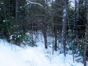 Snow absorbing sound in the Maine woods. January 2015.