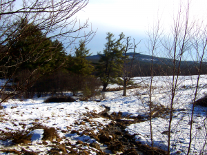 The southerly view from the spring near my home, taken a month ago before the deluge of snow hit. Note the enduring green around the water flowing from the spring, despite the Maine January.