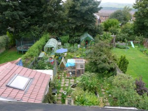 A view of Claire Gregory's Permaculture Garden.