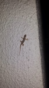gecko on a wall
