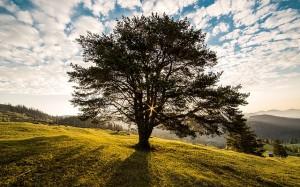 Tree at dawn, Bucovina, Romania