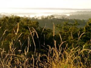 Grass Illuminated by the Setting Sun. Photo by MemoryCatcher. CC0 Public Domain.