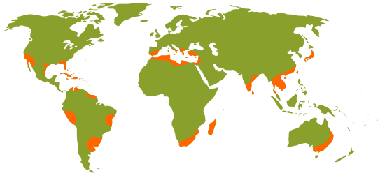 A map of worldwide citrus production. Not included: Colorado. Via.