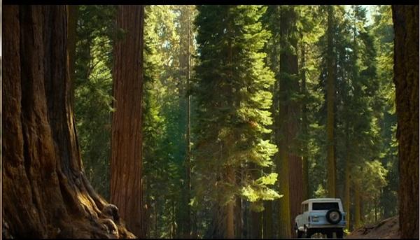 RedwoodsOfColorado