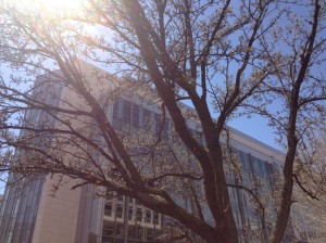 budding tree and city builting
