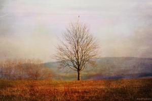 Lone bare tree in a field