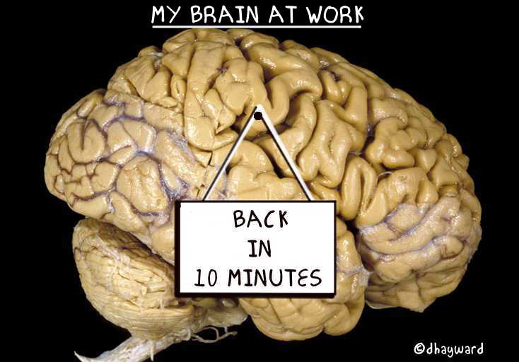 BRAIN AT WORK