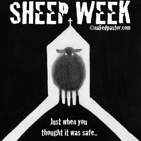 sheep week cartoon by nakedpastor david hayward