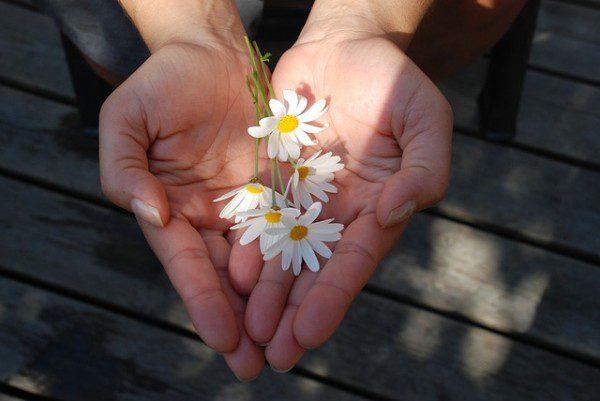 flower-22656_640