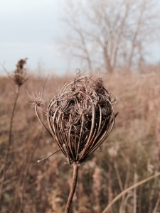 1 seedpod