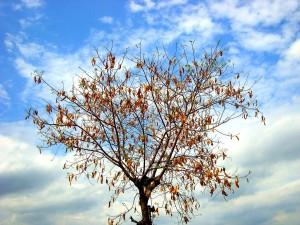 """""""A tree in autumn season"""" by Arivumathi, CC BY-SA 3.0"""