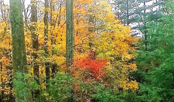 Autumn in Indiana.