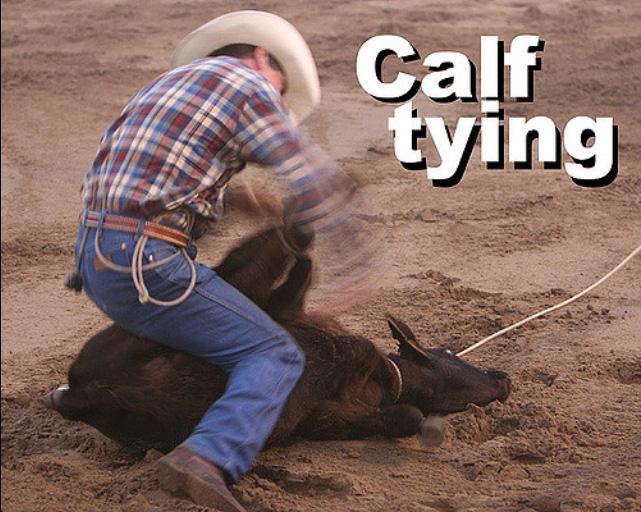 Calf Tying