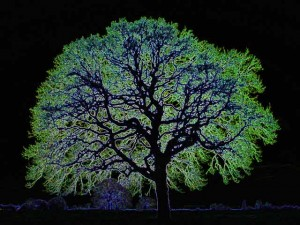Glowing-tree (1)