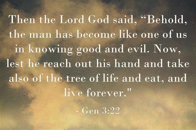 What Was The Tree Of Life In The Bible?   Jack Wellman