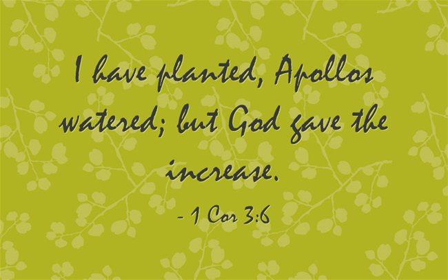I-have-planted-Apollos