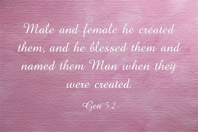 Male-and-female-he