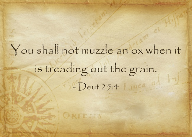 """What Does """"Do Not Muzzle The Ox"""" Mean In The Bible? A Biblical"""