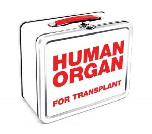 human organs lunch box