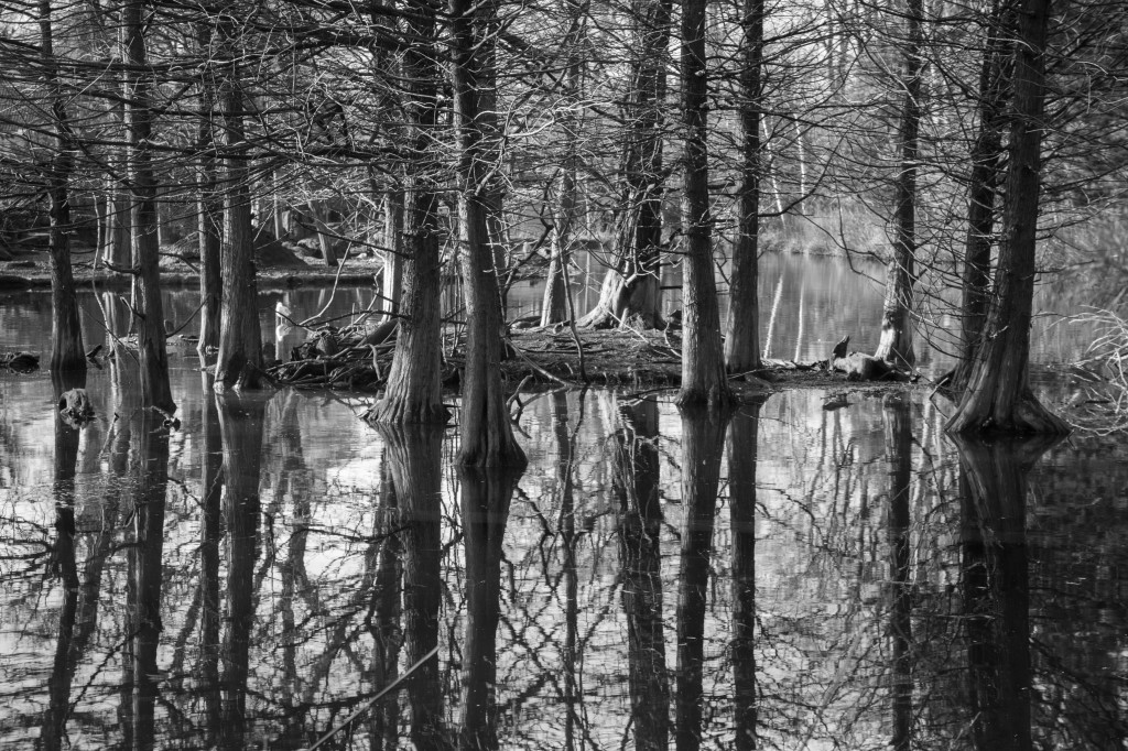 black-and-white-forest-trees-branches