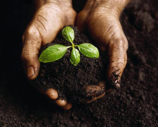 tips-organic-gardening
