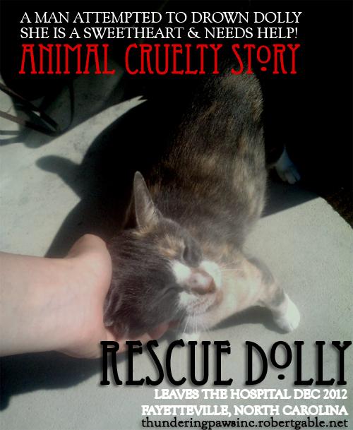 animal cruelty drowning cat