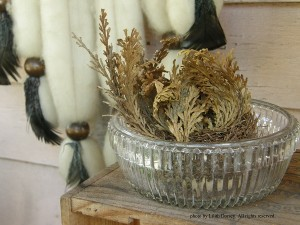 Rose of Jericho, New Orleans. Photo by Lilith Dorsey. All rights reserved.