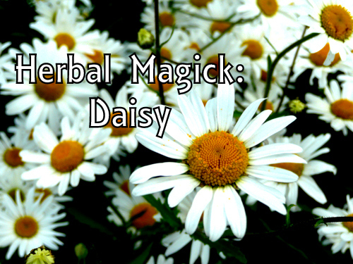Daisy photo by Karen. Text added. Licensed under CC 2.0