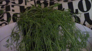 Herbal magick of dill. Photo by Lilith Dorsey