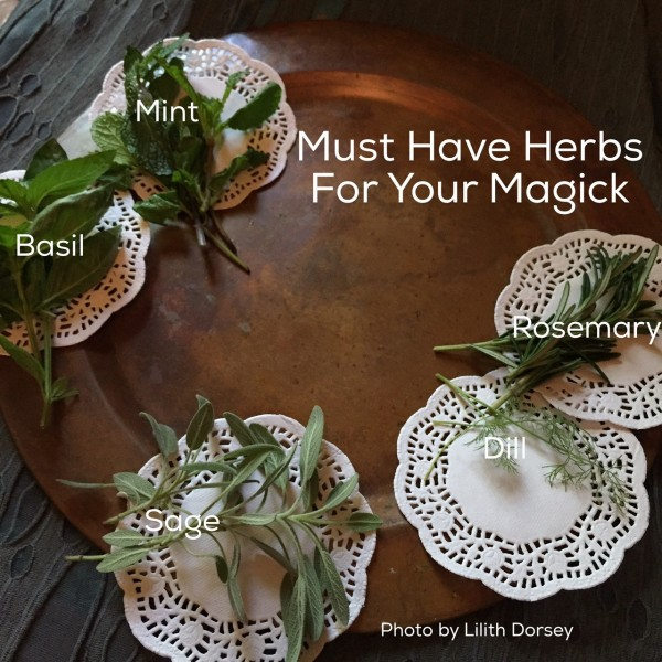 Must Have Herbs photo by Lilith Dorsey. All rights reserved.