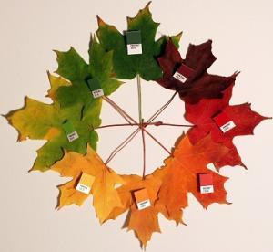 Sugar Maple - Acer Saccharum photo courtesy of Wikimedia Commons.