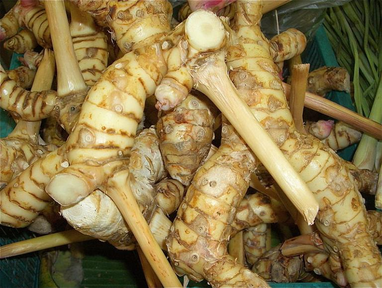 Galangal root photo courtesy of wikimedia commons. Licensed under CC 0.0