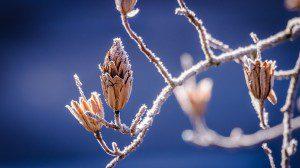 winter-598631_960_720